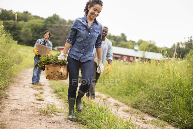 Farmers walking and carrying baskets of freshly picked vegetables on organic farm. — Stock Photo