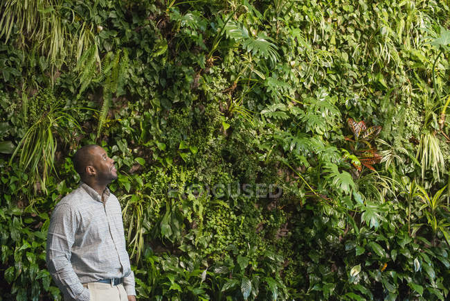 Man looking up at lush foliage covering green wall. — Stock Photo
