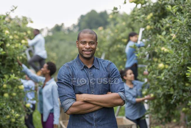 Mann Stand im Obstgarten mit verschränkten Armen und Gruppe von Menschen, die Äpfel von den Bäumen pflücken — Stockfoto