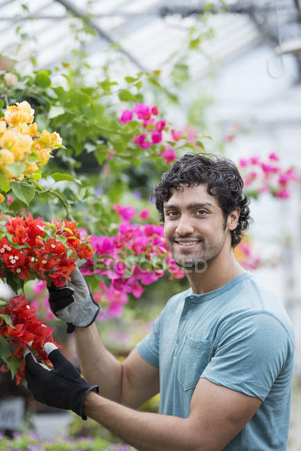 Young man tending flowering plants in organic greenhouse. — Stock Photo