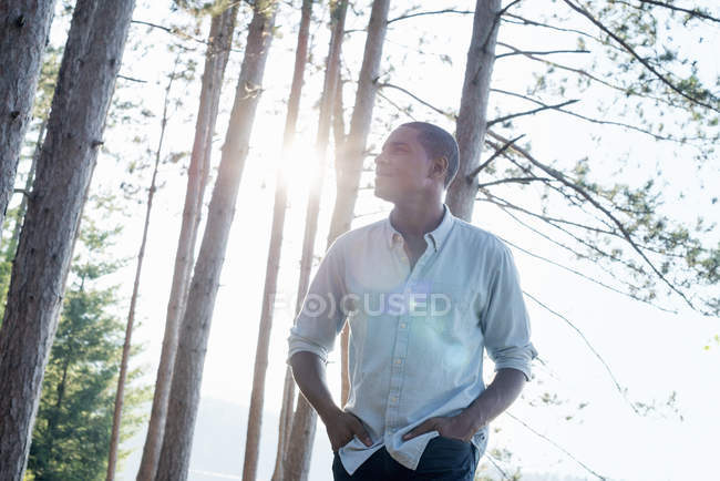 Man standing in shade of pine trees in summer and looking up. — Stock Photo