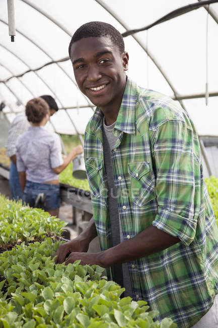 Hombre joven cuidando las plantas de semillero y sonriendo con amigos jardinería en invernadero - foto de stock
