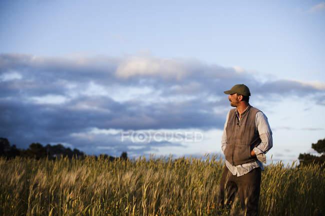 Человек, стоящий над сельскохозяйственными культурами и полями в Санта-Крус на закате . — стоковое фото