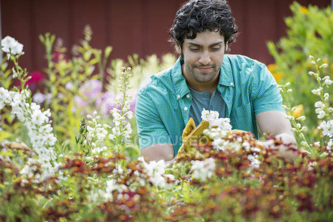 Young man working in plant nursery surrounded by flowering plants. — Stock Photo