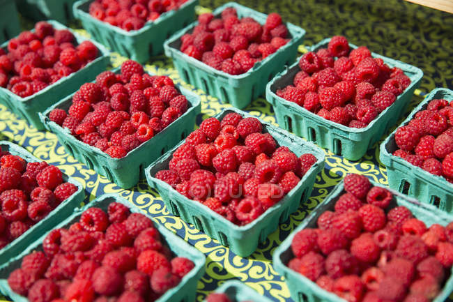 Boxes of organic raspberries on farmer market stall. — Stock Photo