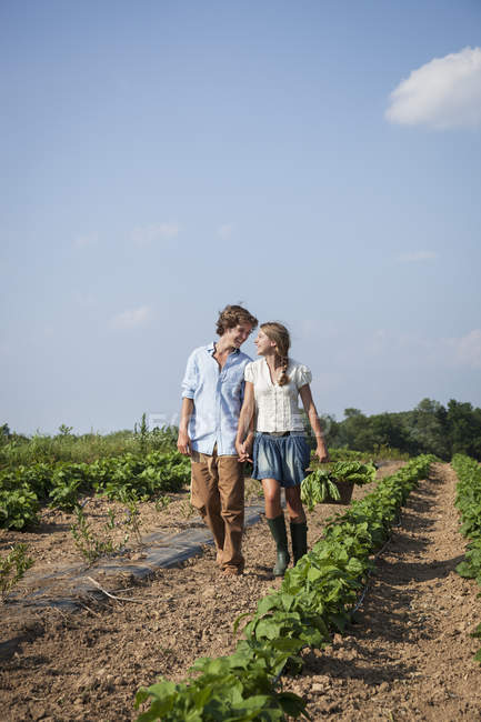 Young couple walking along rows of vegetable plants in farm field and holding hands and basket of harvested crops. — Stock Photo