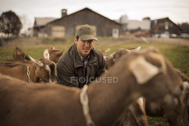 Agriculteur travaillant et paître les chèvres à la ferme. — Photo de stock