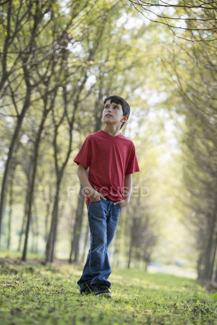 Pre-adolescent boy in woodland looking up curiously. — Stock Photo