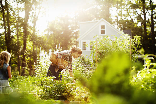 Woman with child picking vegetables in garden in soft light. — Stock Photo