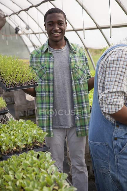 Молода людина, тримаючись за лотки зеленим Саджанці парникових — стокове фото