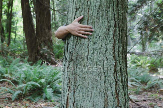 Braço masculino abraçando árvore tronco em verde floresta — Fotografia de Stock