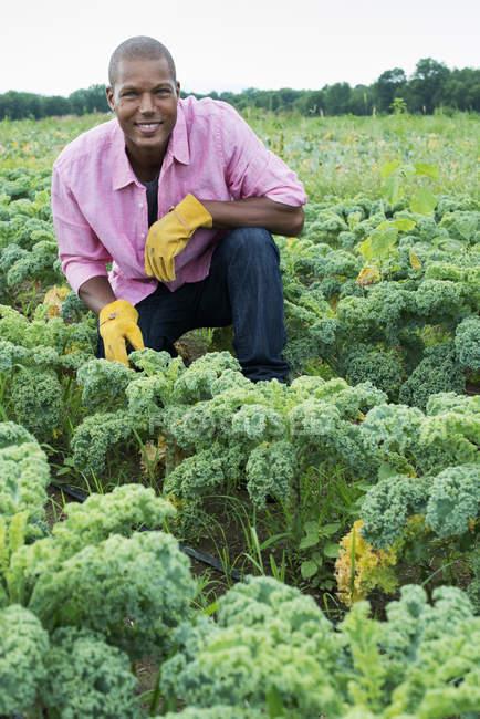 Homme inspectant les cultures de plants de légumes verts bouclés qui poussent sur la ferme biologique — Photo de stock