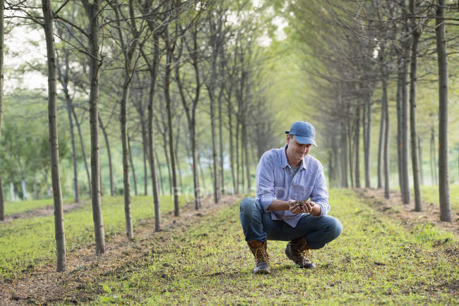 Man in cap crouching and examining handful of soil in park with rows of trees. — Stock Photo