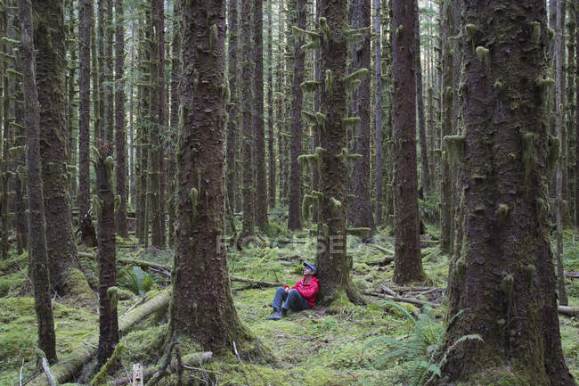 Man sitting among moss-covered spruce trees in lush rainforest in Washington, USA — Stock Photo