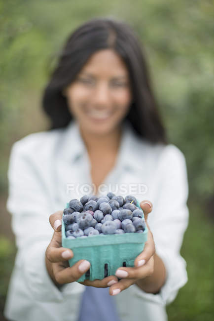 Woman holding punnet of freshly picked organic blueberries at farm. — Stock Photo