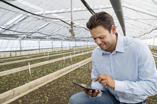 Man using digital tablet among rows of seedlings in greenhouse of plant nursery. — Stock Photo