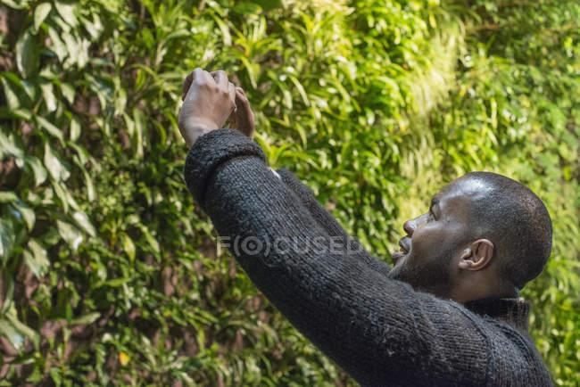 Hombre tomando fotos con smartphone de pared de follaje exuberante . - foto de stock