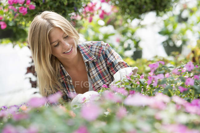 Blonde woman tending flowering plants and green foliage in plant nursery. — Stock Photo