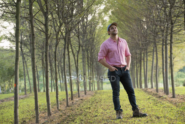 Man standing in avenue of trees and looking upwards. — Stock Photo
