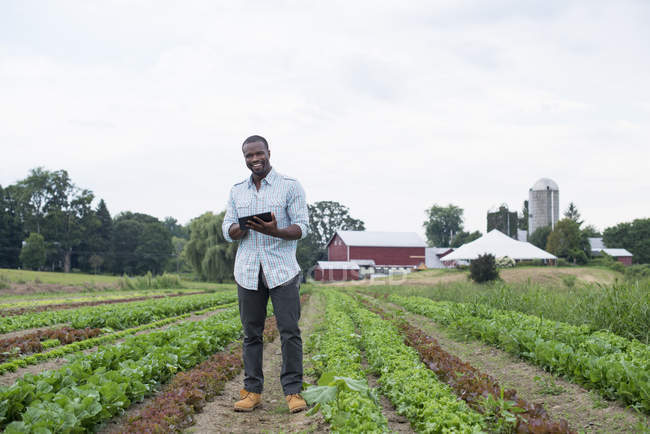 Man inspecting lettuce crops with digital tablet on organic farm field. — Stock Photo