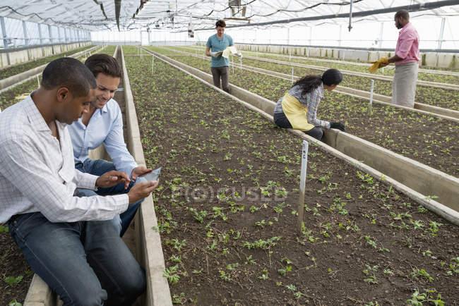 Homens usando digital comprimido em estufa de viveiro com jardineiros de trabalho — Fotografia de Stock