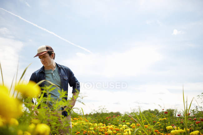 Male farmer working in field of yellow and orange organic flowers. — Stock Photo
