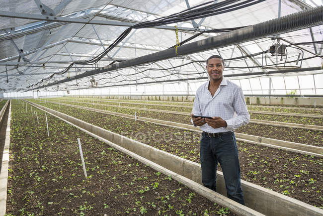 Man holding digital tablet among rows of seedlings in greenhouse of plant nursery. — Stock Photo