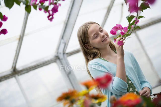 Pre-adolescent girl looking at flowers at organic plant nursery. — Stock Photo
