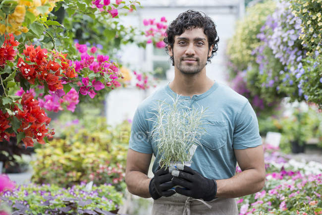 Young man holding potted plant in greenhouse full of flowering plants. — Stock Photo