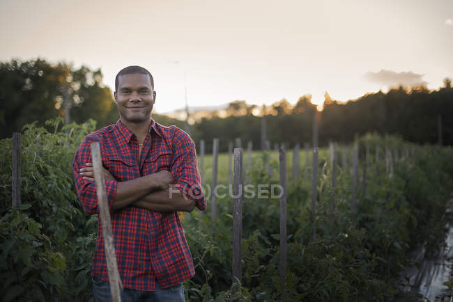 Farmer standing at organic farm with tomato plants. — Stock Photo