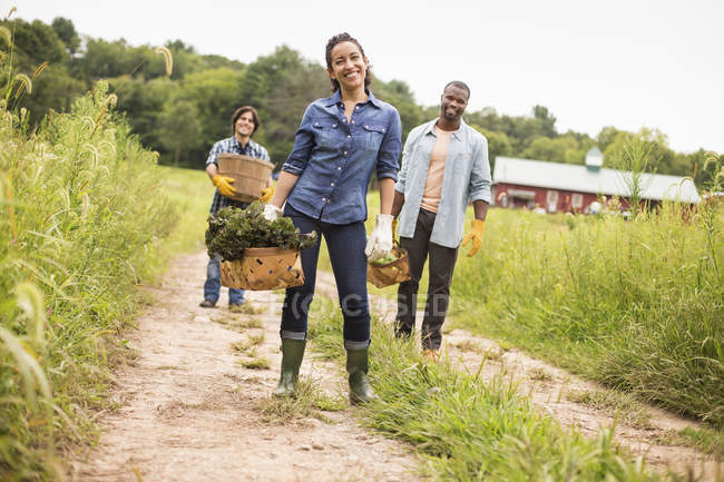 Farmers standing and carrying baskets of freshly picked vegetables on organic farm. — Stock Photo
