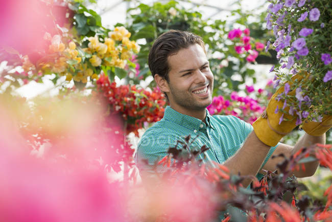 Young man checking and tending flowers in greenhouse of plant nursery. — Stock Photo