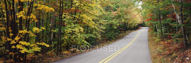 Folhas de outono em árvores que revestem estrada em Baxter State Park, Maine, EUA — Fotografia de Stock