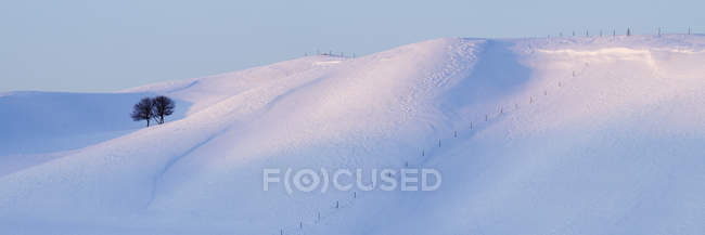 Lone trees on snowy landscape of Hokkaido, Japan — Stock Photo