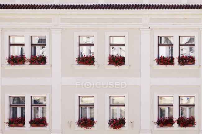 Вікна та коробки з червоними квітами, чеські Крумлов, Чехія — стокове фото