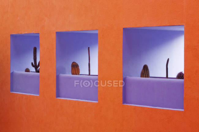 Niches in orange and purple modern wall with cacti plants, full frame — Stock Photo