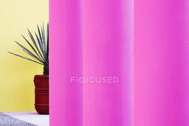 Bright pink architectural columns and house palm plant in pot — Stock Photo