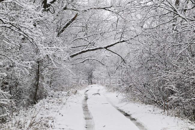 A neve cobriu trilhas através das madeiras em McKinney, Texas, EUA — Fotografia de Stock