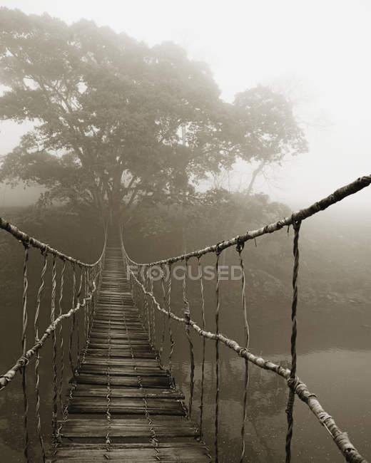 Niebla que rodea árboles y pasarela en la selva tropical, Sapa, Vietnam - foto de stock
