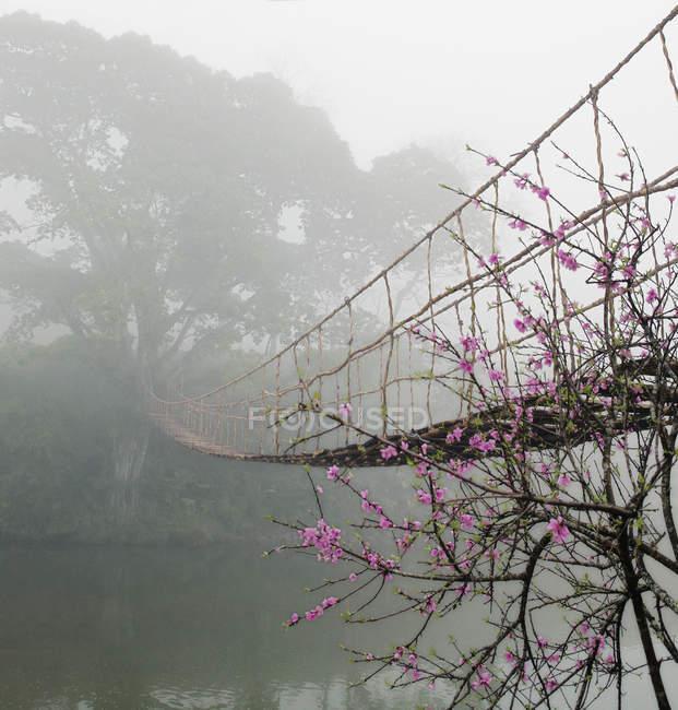 Pasarela suspendida sobre el río de niebla en el bosque - foto de stock