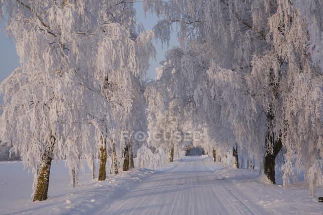 Frozen path through trees in countryside of Estonia — Stock Photo