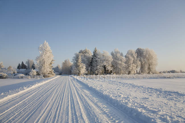 Route de campagne couverte de neige en Estonie — Photo de stock