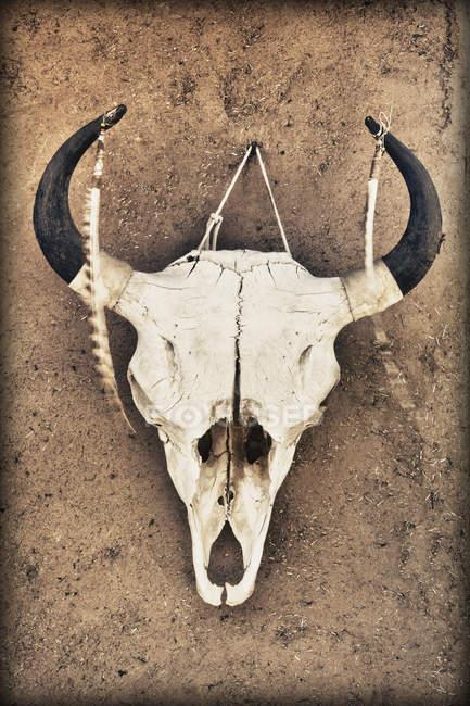 Crânio de vaca pendurado na parede da casa de adobe — Fotografia de Stock