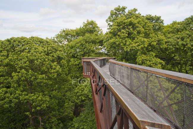 Passerelle pour arbres à Kew Gardens, Londres, Angleterre, Royaume-Uni — Photo de stock
