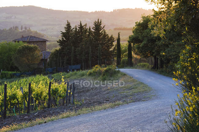 Country road with woodland in mist at sunset in Tuscany, Italy — Stock Photo