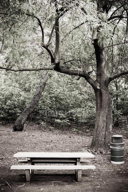 Área de piquenique vazia no parque da Califórnia, EUA — Fotografia de Stock