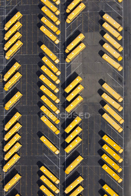 Yellow school buses parked diagonally in parking lot in Seattle, Washington, USA — Stock Photo