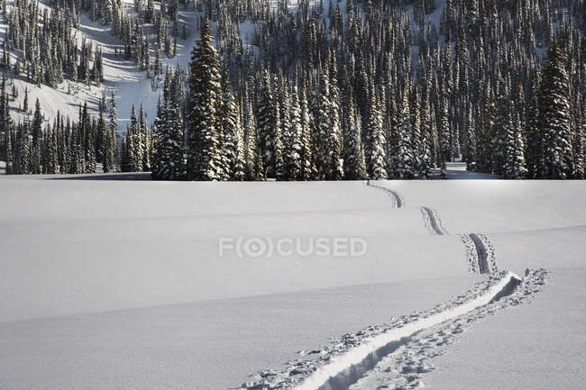Winter landscape with track in white snow, British Columbia, Canada — Foto stock