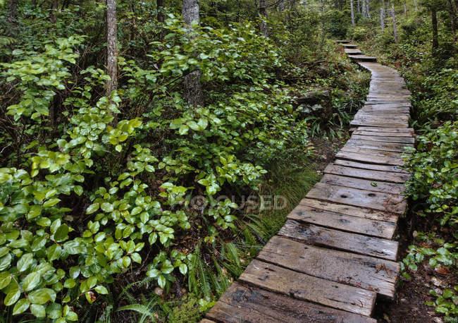 Pasarela de madera a través de plantas forestales - foto de stock