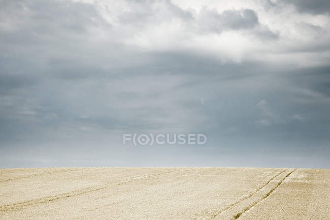 Champ récolté avec des pistes de blé doré et tracteur dans le champ de blé en Angleterre, Grande-Bretagne, Europe — Photo de stock